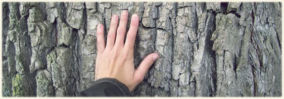 Arbres remarquables meristemes page 5 - Reconnaitre les arbres par leur tronc ...