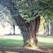 02) arbre de Judée du Miroir - octobre 2014