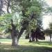 03) arbre de Judée du Miroir - octobre 2014