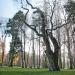 05) arbre de Judée du Miroir - décembre 2016