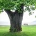 08) arbre de Judée du Miroir - mai 2018