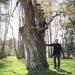 16) arbre de Judée du Miroir - avril 2019