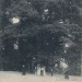 cp 1- Chêne de Saint-Martin-Bellevue