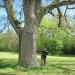 Chêne de Tougues