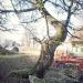 07) Erables champêtres du Sauget