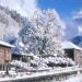 46) tilleul sous la neige