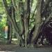 Charme colosse du parc La Grange