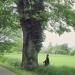 Chêne pédonculé à Jussy