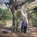Chêne du jardin botanique de Genève