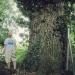 Chêne de Valavran
