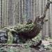 arbre disparu - Bellevaux