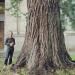 Sequoia géant - Reignier