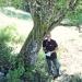 Alisier blanc de la Buchille, Vailly