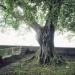 Charme du parc Dolfuss, Evian