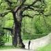 Chêne de st-Jeoire