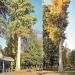 Cyprès chauves du jardin de l'Europe, Annecy