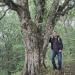 Érable champêtre du Beulet, Beaumont