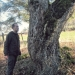 Érable champêtre du Sauget, Machilly