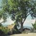 Frêne d'Avully, Brenthonne