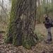 Peupliers Grisard du bois de Vernaz, Gaillard