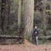Mélèzes - bois de Lonnaz