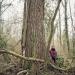 Peuplier noir du bois de Vernaz, Gaillard