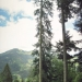 Sapin blanc des Ravières, la Chapelle-d'Abondance
