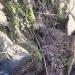 Saule têtard de l'Huche Bonvard, Massongy