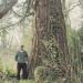 Sequoia géant de Crevy, Veigy
