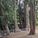 Thuya géant du parc Cohendier, Saint-Pierre-en-Faucigny