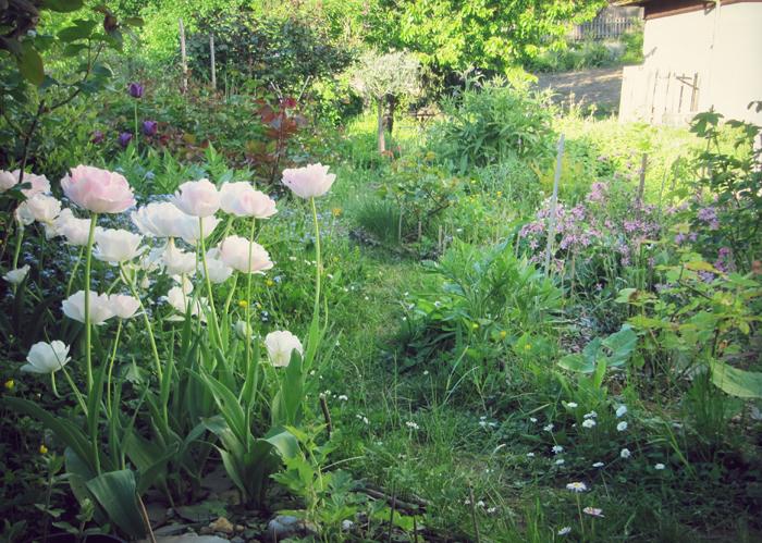 Au jardin meristemes for Au jardin