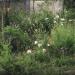 jardin depuis la fenêtre - juin 2012