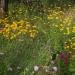 jardin - juin 2012