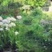 jardin - mai 2013