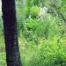 milieu jardin