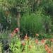 quelques plantes - vers l\'olivier