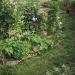 quelques plantes - zone humide
