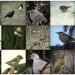 visiteurs à plumes