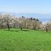Cerisiers de Forchez