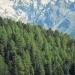 forêt de l'Orgère - 01