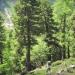 forêt de l'Orgère - 02