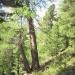 forêt de l'Orgère - 03