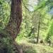 forêt de l'Orgère - 04