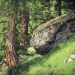forêt de l'Orgère - 05