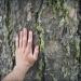 forêt de l'Orgère - 07