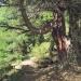 forêt de l'Orgère - 08