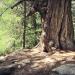 forêt de l'Orgère - 12