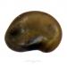 esparcette des sables - onobrychis arenaria