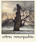 /wp-content/gallery/icones/icone-arbres.jpg?i=1489087717