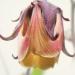Rosaceae > Geum rivale - Benoite des ruisseaux
